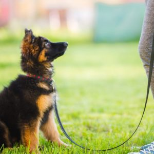 Reasons To Get Your Dog A Structured Development Plan